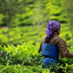 DeHaat Raises $4m Seed Round from Omnivore & AgFunder to Bring Indian Farmers Out of Poverty