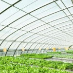 3 Obstacles Facing the Urban Agriculture Industry in New York