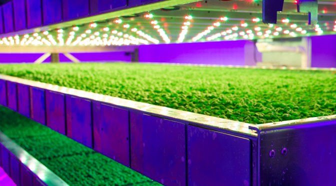 BREAKING: Intelligent Growth Solutions Raises £5.4m Series A with S2G, AgFunder, SIB for Breakthrough Vertical Farm Tech