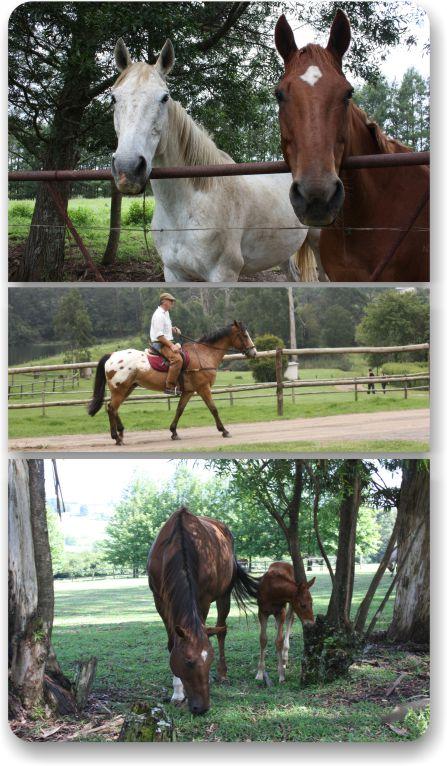 Equestrian Centres, Bridleways, Animal tracks using AggreBind