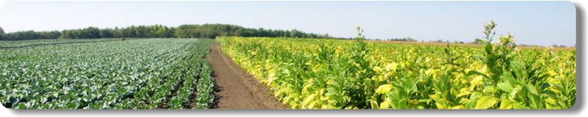 Agricultural solutions with AggreBind