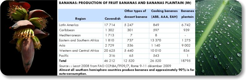 Banana Plantation soil stabilization and dust control using AggreBind