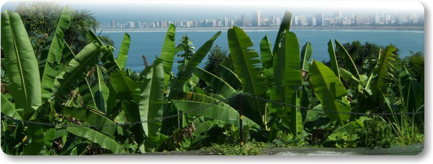 Banana Plantation dust control and soil stabilization with AggreBind