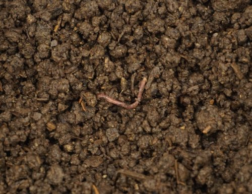 Vermicompost – Colorado Worm Company