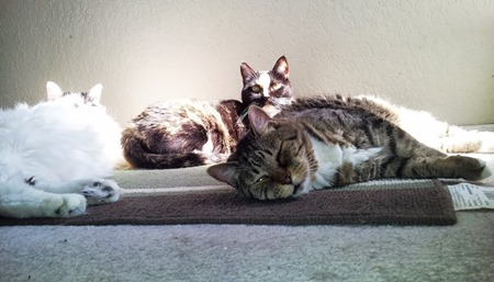 kitties_sunning
