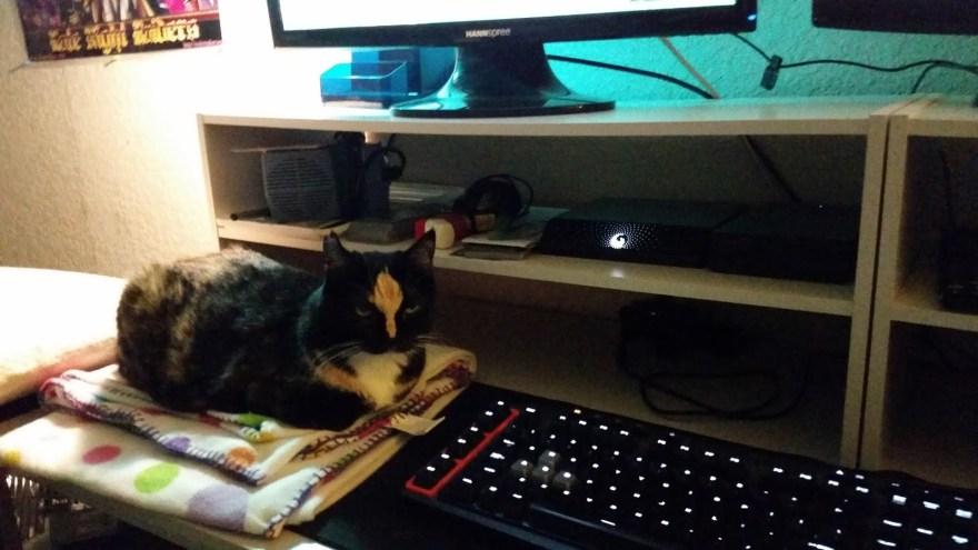 deskCat