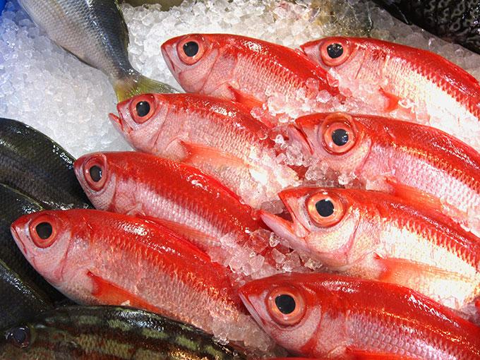沖縄の三大高級魚アカマチ
