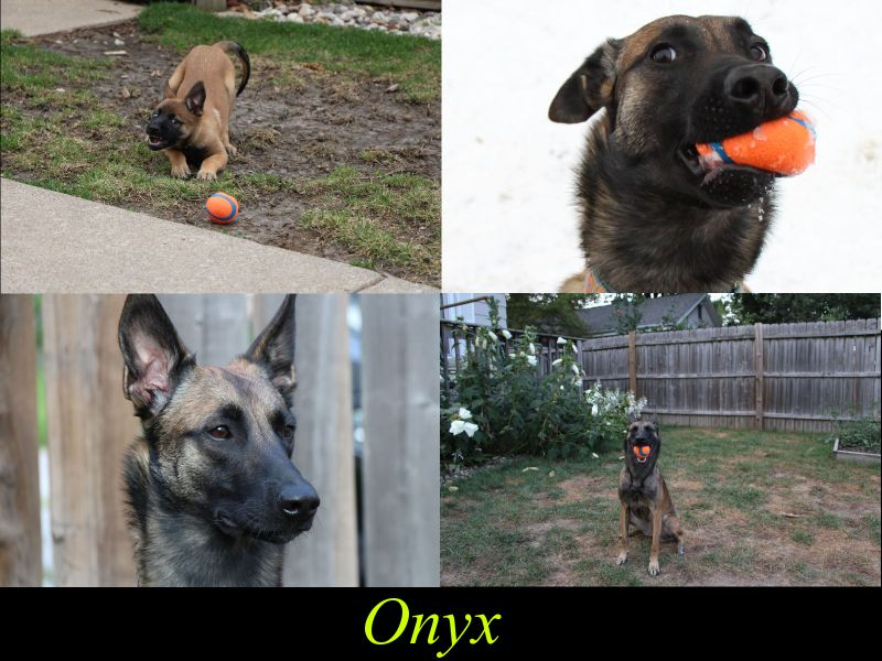 onyx_collage