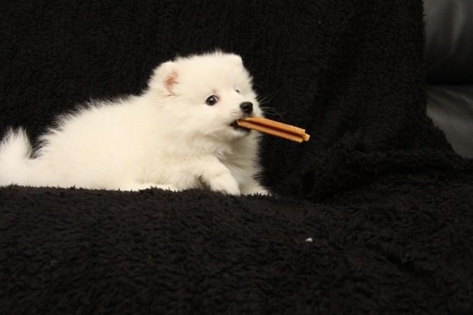 """Pedigree dentastix er hunde-""""slik""""."""