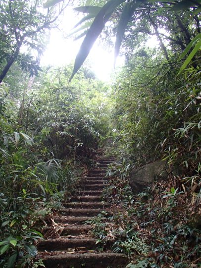 Stairs through the jungle