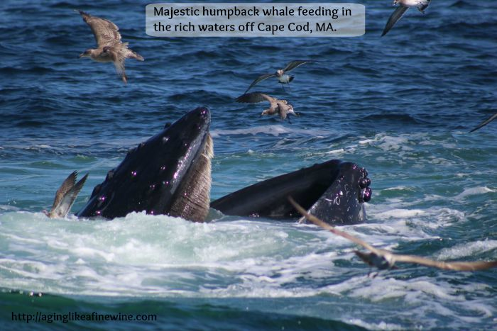 feeding whale with title