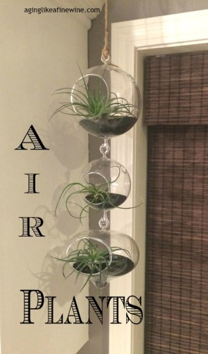 010air plants w text