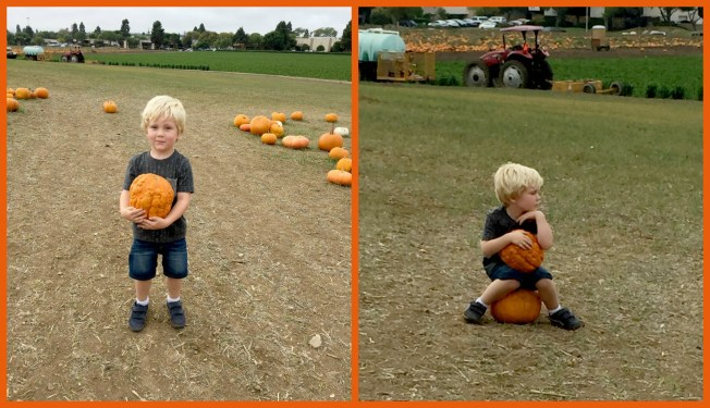 Noah pumpkin collage 2
