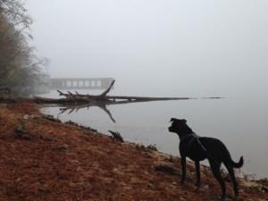 Ichabod Fog and Cotton Puffs
