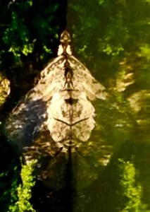 River Art:  Reflections