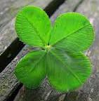 four-leaf clover small