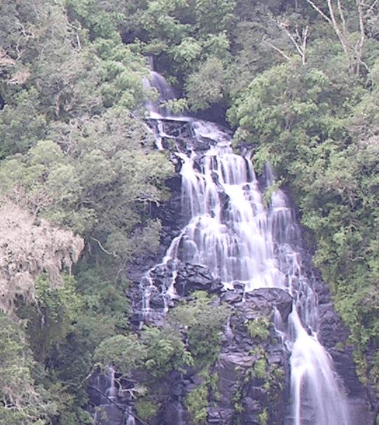 CANCELADA: É hoje a audiência pública para a concessão da Floresta Nacional de São Francisco de Paula (RS)