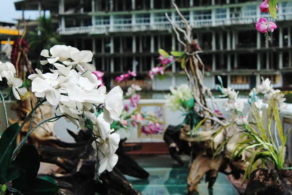 beautiful flowers in colombo sri lanka