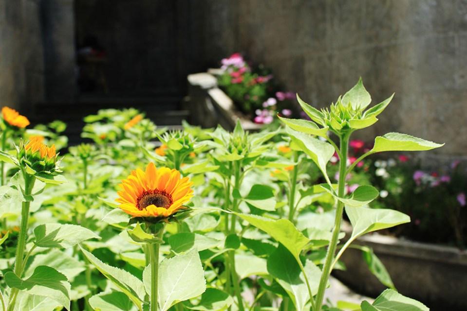 fleur ba na hills danang vietnam la vie en rose