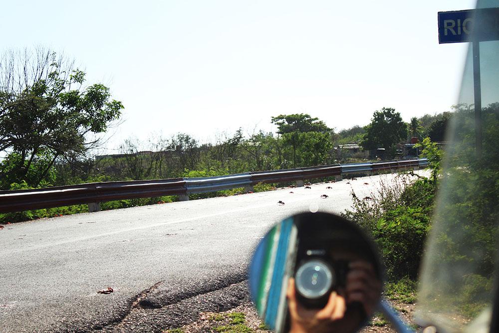 traveler take photo dslr of crab migration cuba trinidad