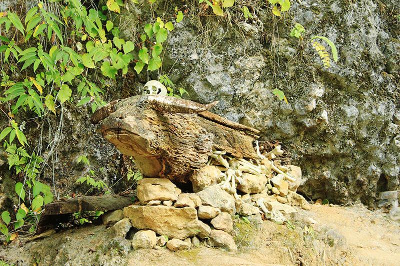 buffalo shape wooden coffin skull kete kesu cave toraja indonesia_agirlnamedclara