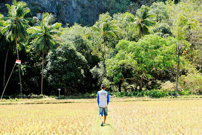 local man walk in the middle of paddy field rammang rammang hill background makassar indonesia_agirlnamedclara