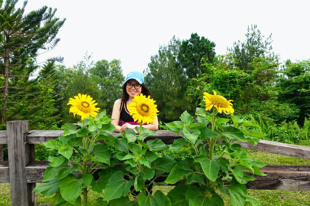 girl eyeglasses blue cap smile sunflowers nature taman saujana putrajaya malaysia_agirlnamedclara