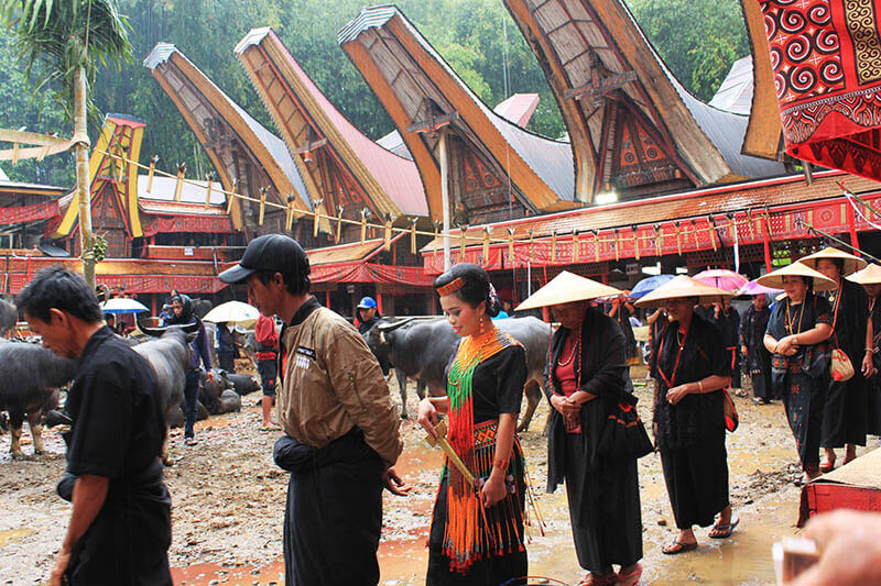 guests family female dancer walk around rambu solo funeral ceremony toraja rain_agirlnamedclara