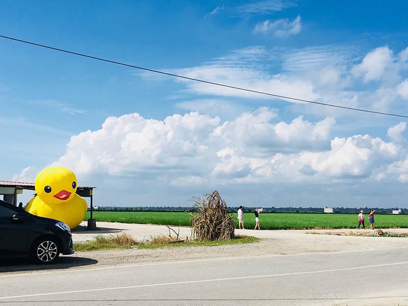giant yellow duck paddy field sekinchan blue sky agirlnamedclara