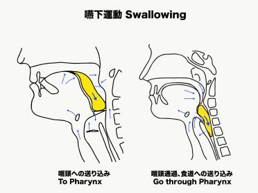 咽頭を通過する時の喉頭蓋の動き