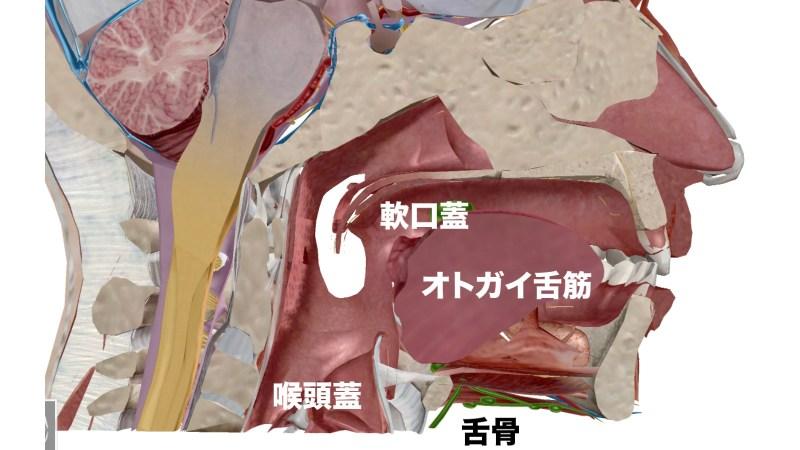 口腔の解剖図