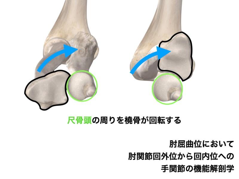 肘の回内の機能解剖学