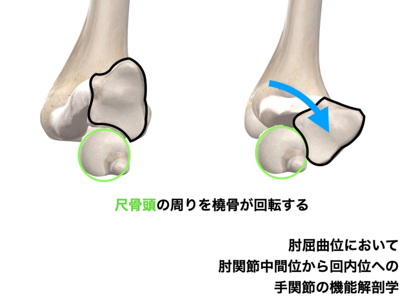 肘の回内 空間配置