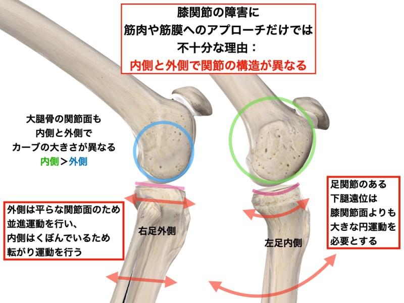 膝の内側と外側の関節の構造