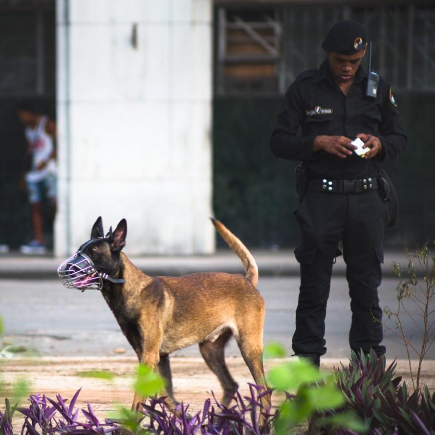 Havana Cuba Police Dog