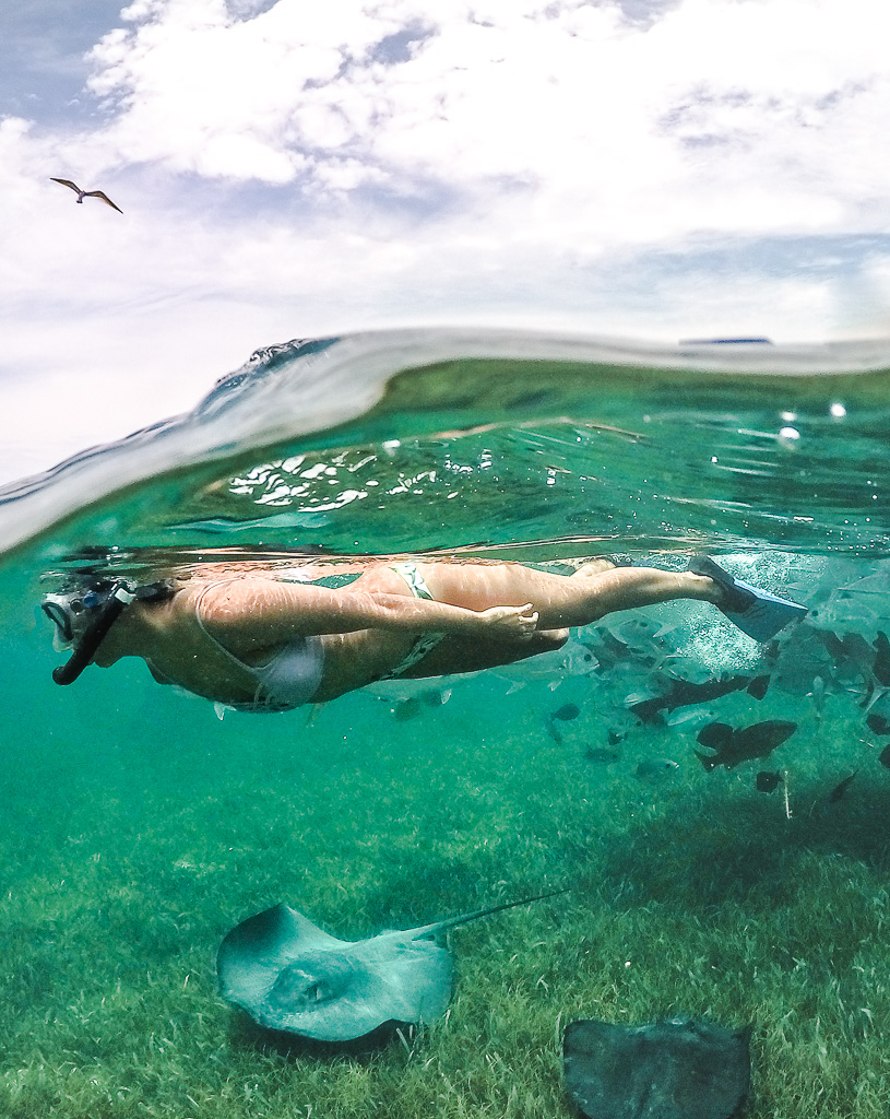 Swimming With Sharks In Belize