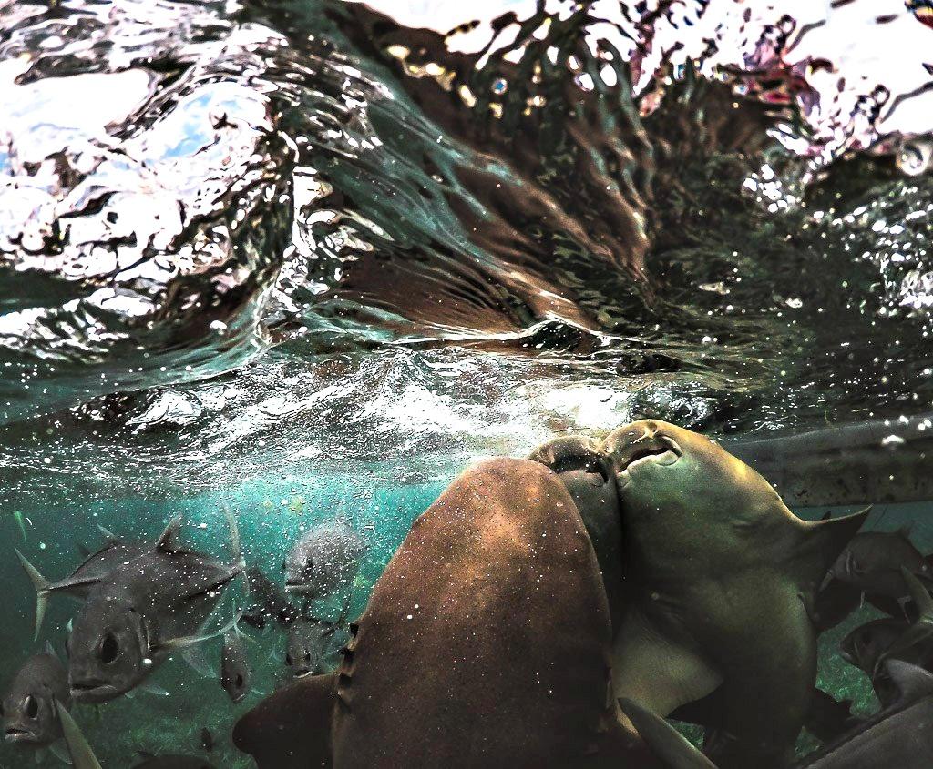 Caveman Snorkeling Tours Belize