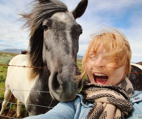 Experiences in Iceland: Icelandic horse