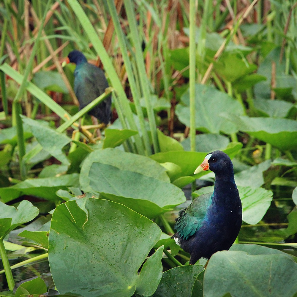Birdlife in Everglades National Park, Florida