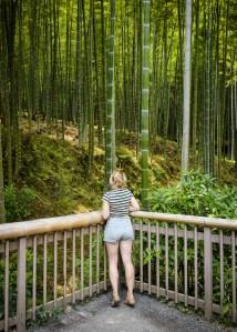 Bamboo trees in Sogenchi garden, Arashiyama, Kyoto, Japan