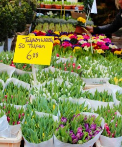 Tulips at a market in Amsterdam