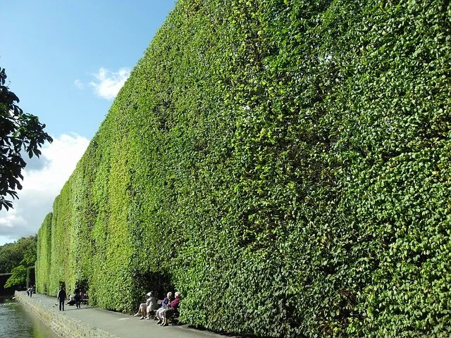 The Hedge of Protection