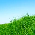 Grass background image