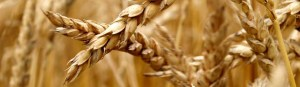 slider_corn