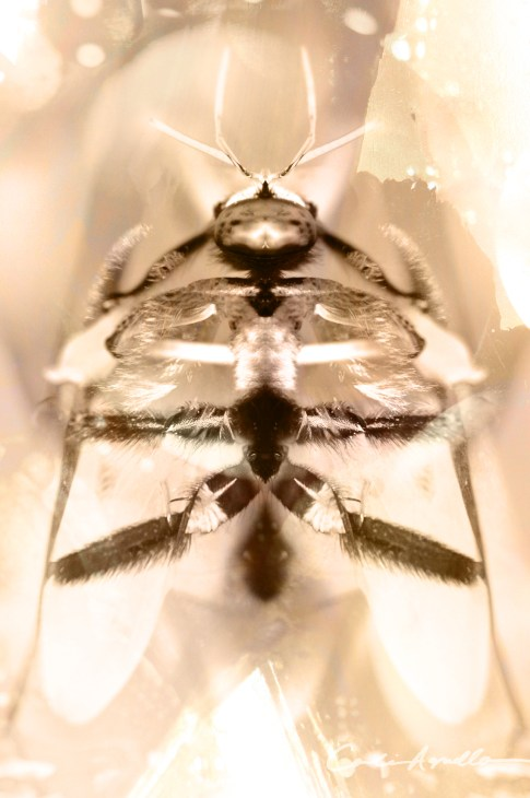 galacticbumblebee