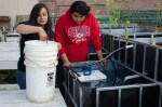 Crystal De La Cruz and Bernice Aguilera put fish in their aquaponics tank.