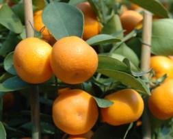 Mandarin Objective Measurement Survey