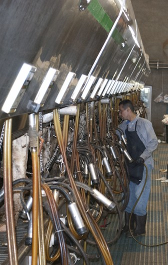 A worker at a Tulare County, CA dairy. Photo by Sabrina Hill
