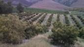 California agriculture update