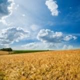 Grain Stocks Report
